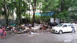 Kühe Abfall Müll Indien